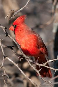 0812_Cardinals29_024