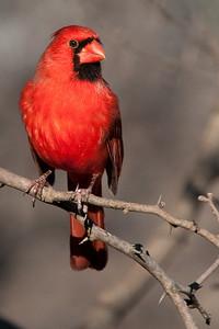 0812_Cardinals29_027