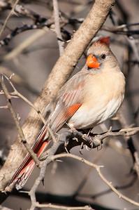 0812_Cardinals29_013