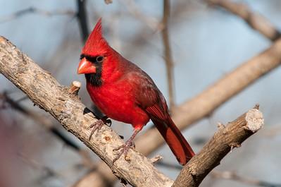 0812_Cardinals29_016