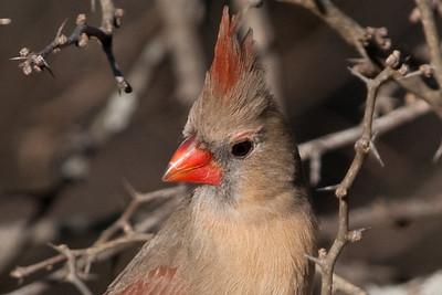 0812_Cardinals29_039