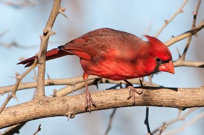 0812_Cardinals29_036