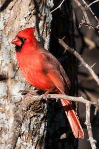 0812_Cardinals29_033