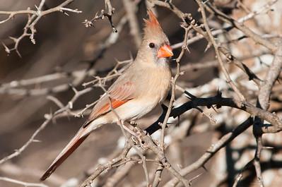 0812_Cardinals29_040