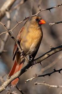0812_Cardinals29_026