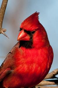 0812_Cardinals29_035