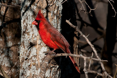 0812_Cardinals29_020