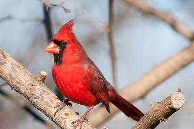 0812_Cardinals29_018