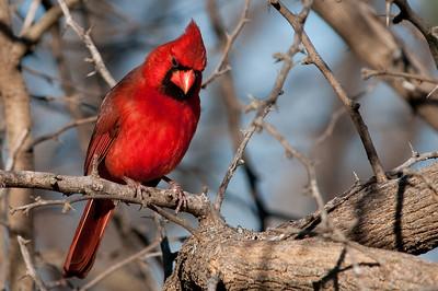 0812_Cardinals29_031