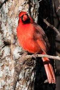 0812_Cardinals29_034