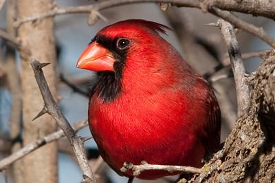 0812_Cardinals29_014