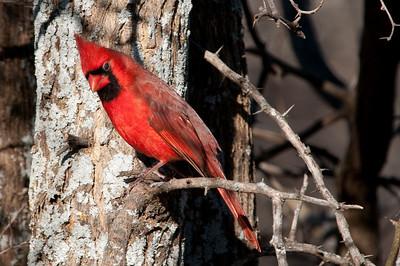 0812_Cardinals29_022
