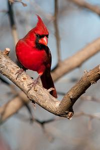 0812_Cardinals29_017