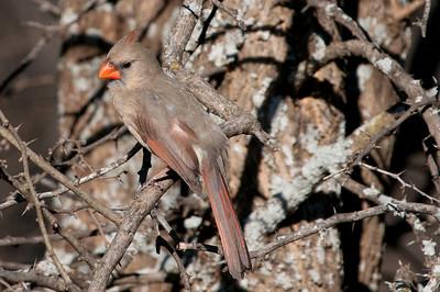 0812_Cardinals29_007