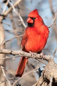 0812_Cardinals29_032