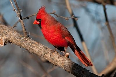 0812_Cardinals29_046