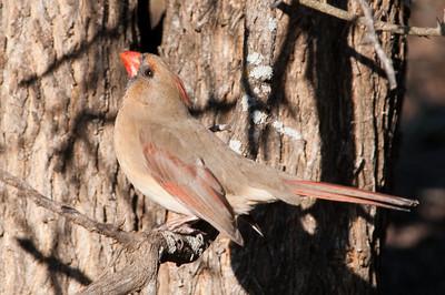 0812_Cardinals29_028