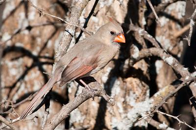 0812_Cardinals29_008