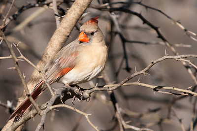 0812_Cardinals29_011
