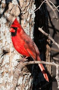 0812_Cardinals29_023
