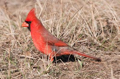 0812_Cardinals29_003