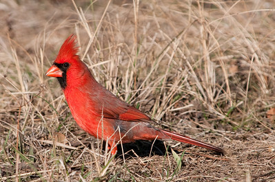 0812_Cardinals29_004