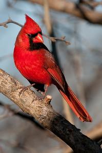 0812_Cardinals29_043