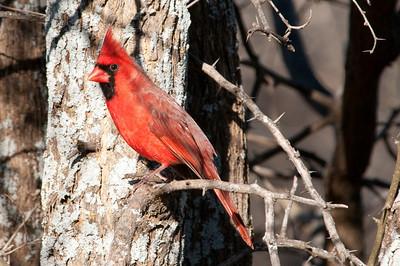 0812_Cardinals29_021