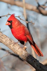0812_Cardinals29_044