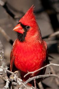 0812_Cardinals29_019