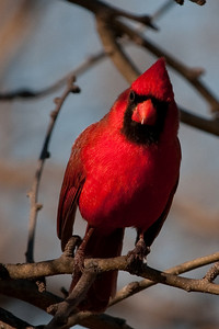 0812_Cardinals29_005