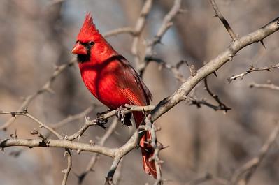 0812_Cardinals29_010