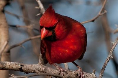 0812_Cardinals29_029