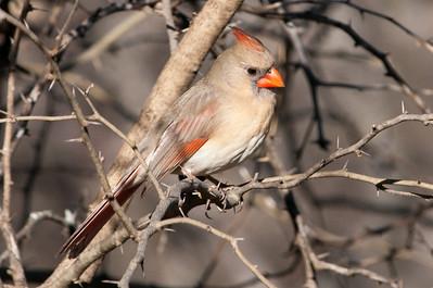 0812_Cardinals29_012