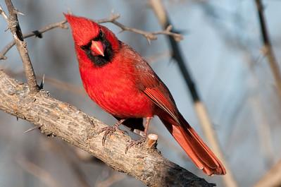 0812_Cardinals29_045