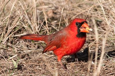 0812_Cardinals29_025