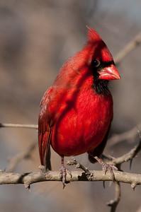 0812_Cardinals29_009