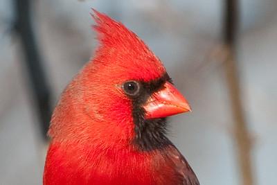 0812_Cardinals29_042