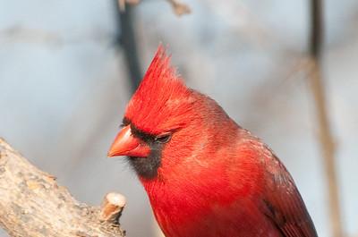 0812_Cardinals29_041