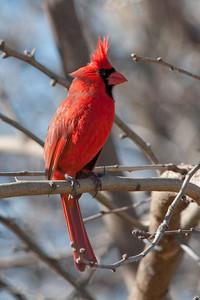 0812_Cardinals30_011