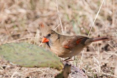0812_Cardinals30_009