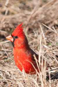 0812_Cardinals30_034