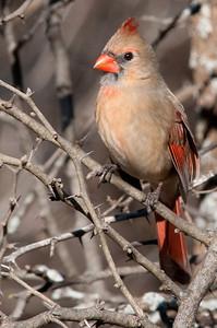 0812_Cardinals30_024