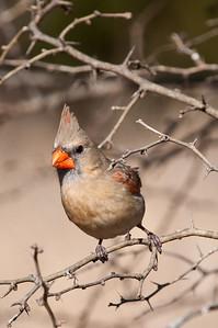 0812_Cardinals30_007