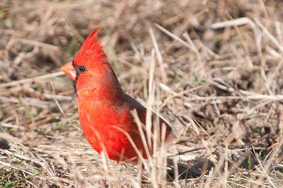 0812_Cardinals30_033