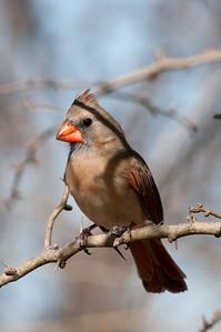 0812_Cardinals30_006