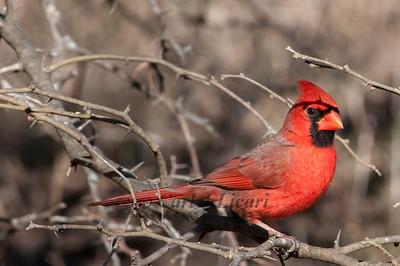 0812_Cardinals30_013
