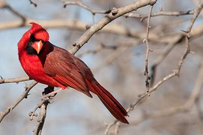 0812_Cardinals30_015
