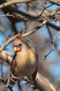 0812_Cardinals30_018