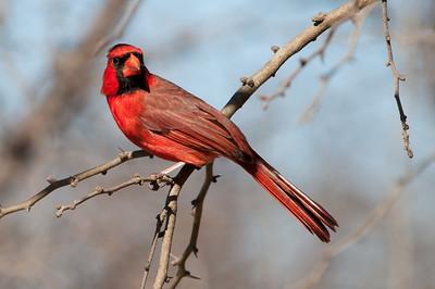 0812_Cardinals30_001